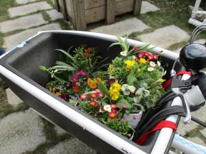 Cargo Fleurs